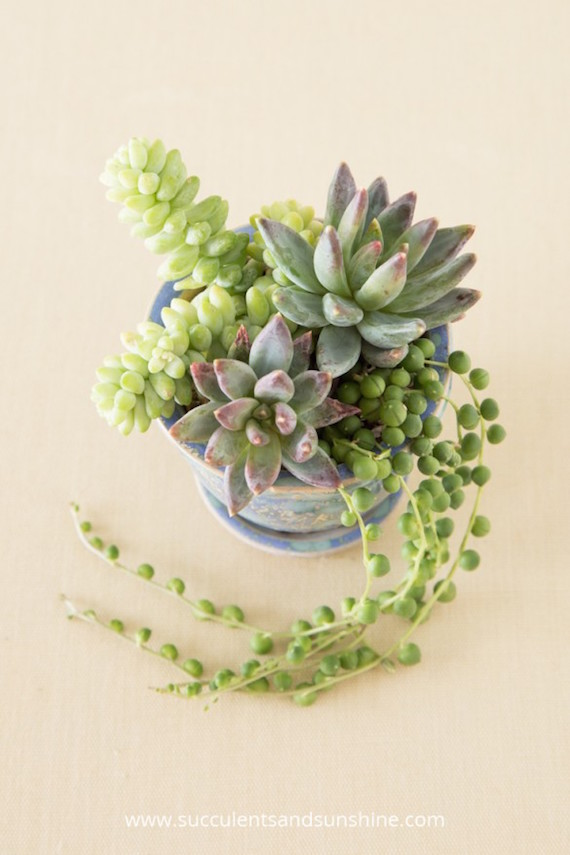 She used trailing succulents to make this cascading arrangement - so beautiful!