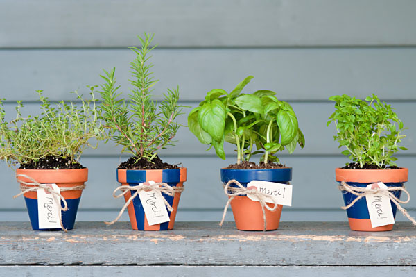 These little potted herbs would make great wedding favors or even wedding shower favors!