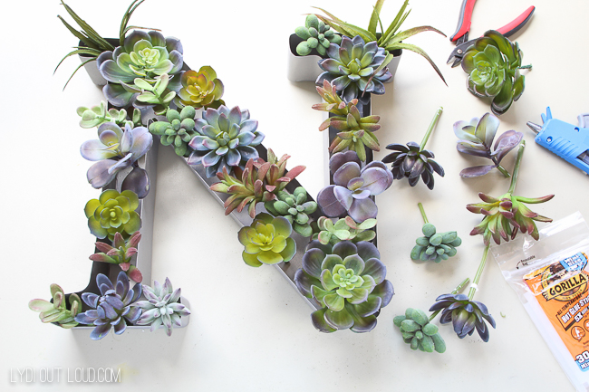 Arrange succulents in planter to your liking before gluing them in!