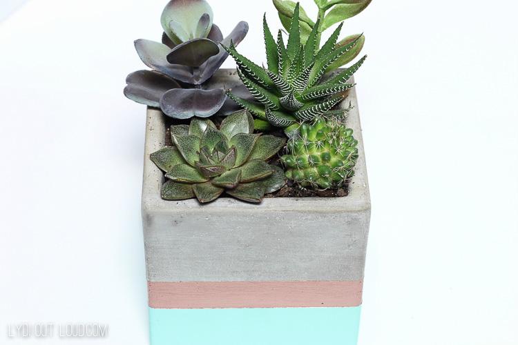 Cactus & Succulent Planter Bookends