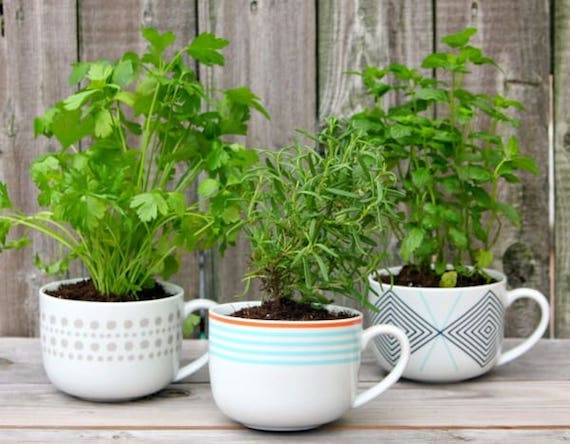 Coffee Mug Herb Garden