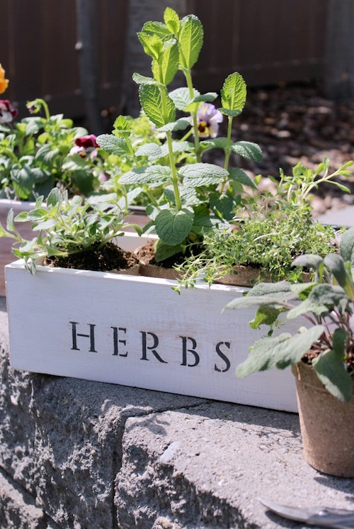 Vintage Tool Box Herb Planter
