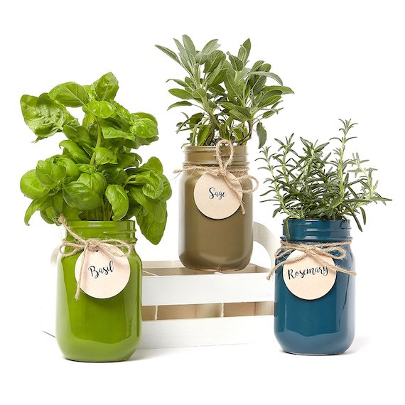 Mason Jar Herb Garden with Seeds
